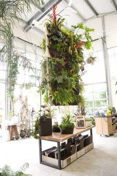 #floragrubb #plants