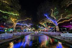 Houston Zoo - Zoo Lights!