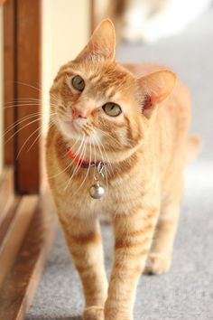 ginger cats are the best
