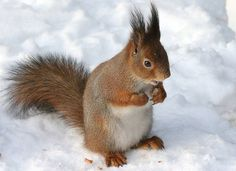 16 things to love about squirrels : TreeHugger