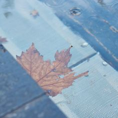 Autumn Leaves on Instagram (Urban Edition) | by Charlie Albright #photography   blog Moments by Charlie Art + Fashion + Lifestyle plus Photography momentsbycharlie [dot] com