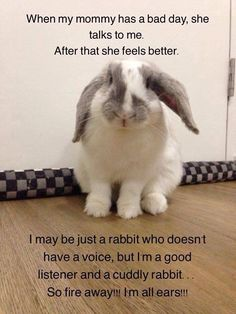 I have a Holland Lop bunny named Snoopy who is a cuddly friend for me and my… Funny Bunnies, Baby Bunnies, Cute Bunny, Bunny Puns, Lionhead Rabbit, Pet Rabbit, Fluffy Bunny, Cute Baby Animals, Funny Animals
