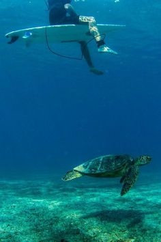 The beautiful ocean. Turtles. Marine life. What's not to like?
