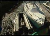 A Million dead Sardines..