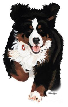 Burmese Mountain Dogs, Paint Your Pet, Dog Quilts, Dog Paintings, Bernese Mountain, Animation, Dog Art, Thing 1, Pet Dogs