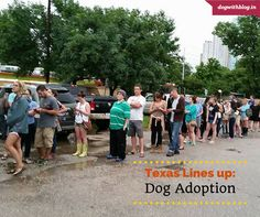Post the floods, citizens of Austin lined up and adopted all the cats & dogs at the shelter. http://dogwithblog.in/adopt-a-dog-india/