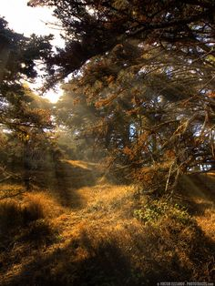 Point Lobos Magic Forest (California) - by Viktor Elizarov from PhotoTraces.com