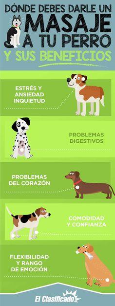 Mascotas en Los Angeles Animals And Pets, Baby Animals, Cute Animals, Funny Animals, Dog Care Tips, Pet Care, Cute Friends, Mundo Animal, Funny Animal Videos