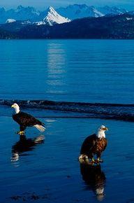 Eagle Beach - southeast Alaska  #majestic