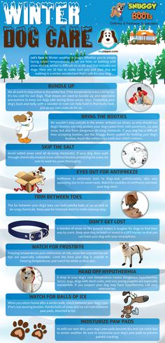 """Brr...don't miss our new """"Winter Dog Care"""" infographic brought to you by Snuggy Boots!"""