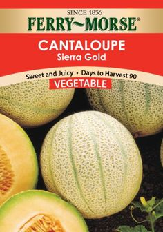 FerryMorse Cantaloupe  Sierra Gold Seeds ** You can find out more details at the link of the image.(This is an Amazon affiliate link)