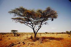 Kenya, via Alix of thecherryblossomgirl