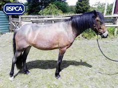 June, New Forest type, 2 Years, Gonsal Farm Animal Centre All Locations, Pet Search, New Forest, Sadie, Farm Animals, Centre, Wildlife, June, Horses