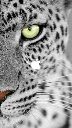 animal wallpaper Best Friends iPhone Wallpaper - i - animals Cats Wallpaper, Tier Wallpaper, Leopard Wallpaper, Animal Wallpaper, Screen Wallpaper, Leopard Eyes, Snow Leopard, Leopard Tapete, Nature Animals