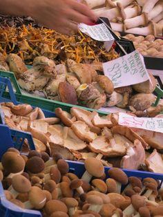 Mushrooms, mushrooms, and more mushrooms. Follow the link to find out more about Valencia's Central Market:   http://mikestravelguide.com/things-to-do-in-valencia-visit-the-central-market/