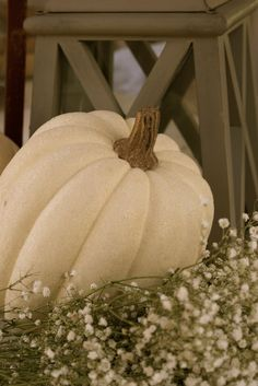 We could each have a white pumpkin for the head table to put our flowers in?