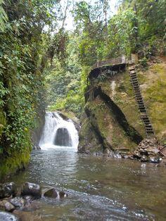 Mindo Cloud Forest, Ecuador Mindo Ecuador, Places Ive Been, Places To Go, Equador, Galapagos Islands, Adventure Awaits, Travel Around, South America, Cloud