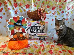 Clump and Seal holiday theme