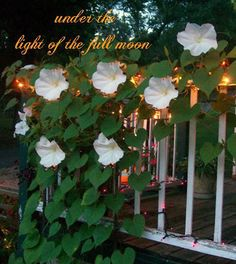 The Moon Garden - a feature article by Sherry Byrum