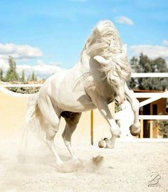Wow! Stunning horse jumping around kicking up dust with wild beauty.