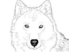 How To Draw A Wolf ~ Draw Central