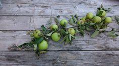 Te veel appels