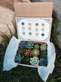 Succulent Treasures Candy Box. Dozen Assorted Premium succulents gift box by SucculentTreasures on Etsy https://www.etsy.com/listing/209955416/succulent-treasures-candy-box-dozen