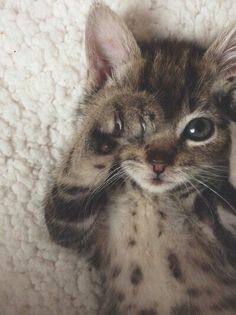 rebloggy.com post cat-love-photography-animals-adorable-eyes-hipster-vintage-boho-indie-cats-grung 128751408761