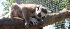 Oshawa Zoo and Fun Farm Durham Region, Bear, Toronto, Fun, Animals, Animales, Animaux, Animal, Bears