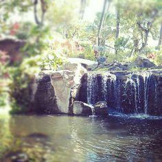 The Westin Maui. Honeymoon retreat? Maybe.
