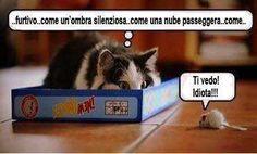 giochiamo a nascondino? #giochi per #gatti http://alimentianimalionline.it/giochi-per-gatti/947-pallina-con-topolino-in-peluche-gioco-per-gatto-camon.html