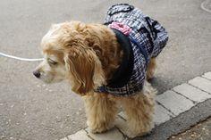 CoCCoLa :코콜라 트위드 코트  귀엽고 시크한 강아지옷 코콜라 CoCCoLa 입니다.