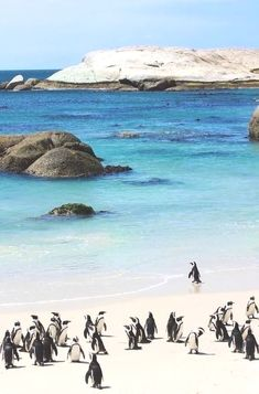 Boulders Beach, Cape Town, South Africa South Africa Accéder au site pour information https://storelatina.com/southafrica/travelling #Africadosul #SouthAfrica #africadelsur South Africa Acceda a nuestro blog encuentre mucha más información https://storelatina.com/southafrica/travelling