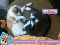 Violetta (blanca y negra) encontró el amor familiar junto a su hermana gatuna y su madre Ángeles. Shhhh ... duerme tranquila por que ahora es feliz y sabe que tiene toda una vida llena de amor por delante. ¡Gracias Ángeles por adoptarla!