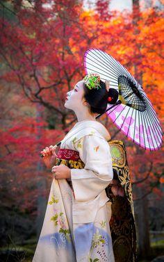 I love studying the geisha culture! I'm not an owner of most photos. Geisha Kunst, Geisha Art, Geisha Japan, Kyoto Japan, Japan Japan, Japanese Kimono, Japanese Art, Japanese Beauty, Asian Beauty