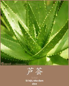 芦荟 - Lú huì - lô hội; nha đam - aloe