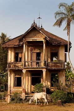 1930's abandoned french-colonial villa with cow | Kandal Province, Cambodia