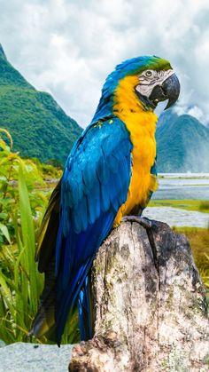 Blue and yellow macaw parrot in Rio de Janeiro, Brazil Pretty Birds, Beautiful Birds, Animals Beautiful, Nature Animals, Animals And Pets, Cute Animals, Tropical Birds, Colorful Birds, Exotic Birds