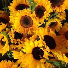 Love these sunflowers! Bursting with sunshine! #sunflowers #flowers