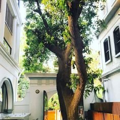 Under the 200 year old Mango tree #Dupleix #history #frenchquarter #pondicherrylove #pondicherry #incredibleindia #travelpearlluxe @pearlluxe #connected #pondilove #iphoneonly #vacation #instatraveling #instagram #photooftheday #picoftheday #instalike #friends #beautiful #followme #travelgram #igtravel #instapassport #selfie by taruna_seth
