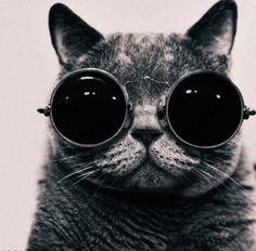 need I say?... cooool cat