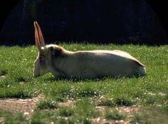 Le 10 specie animali più in pericolo d'estinzione.