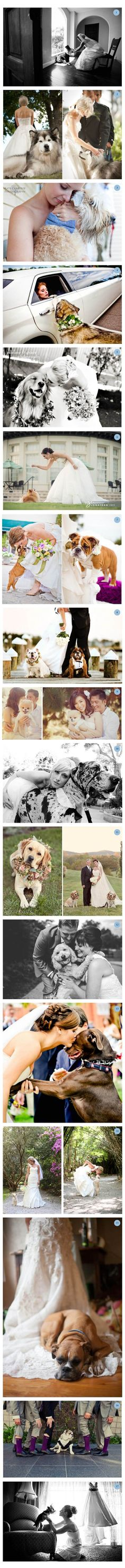 Having your puppies on your wedding day!