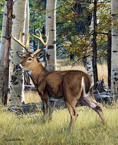 size: Giclee Print: Fall Whitetail by Russell Cobane : This exceptional art print was made using a sophisticated giclée printing process, which deliver pure, rich color and remarkable detail. Wildlife Paintings, Wildlife Art, Animal Paintings, Animal Drawings, Drawing Animals, Deer Paintings, Deer Drawing, Deer Pictures, Deer Art