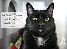 Look for the  good in others #adopt #Dutchess County SPCA
