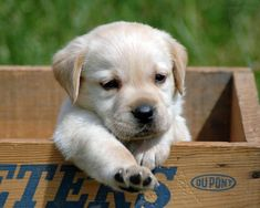 Google Image Result for http://images5.fanpop.com/image/photos/29000000/Puppies-puppies-29017071-1280-1024.jpg