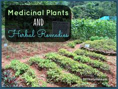 Don't take pills, learn the power of medicinal plants and heal with natural herbal remedies!