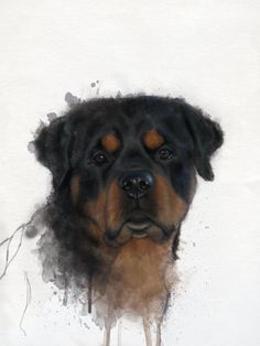 Before the bankers came and took charge of our money, the Rottweiler, a German dog breed, had already tasted what it is like to be the protector of money. Dog Training Methods, Dog Training Techniques, Best Dog Training, Rottweiler Love, Rottweiler Puppies, German Dog Breeds, Puppy Obedience Training, Positive Dog Training, Easiest Dogs To Train