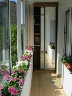 Transformation d'un balcon vitré en petit jardin d'hiver fleuri