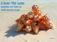 Road Trip Guide to searching for conch on Grand Bahama Island